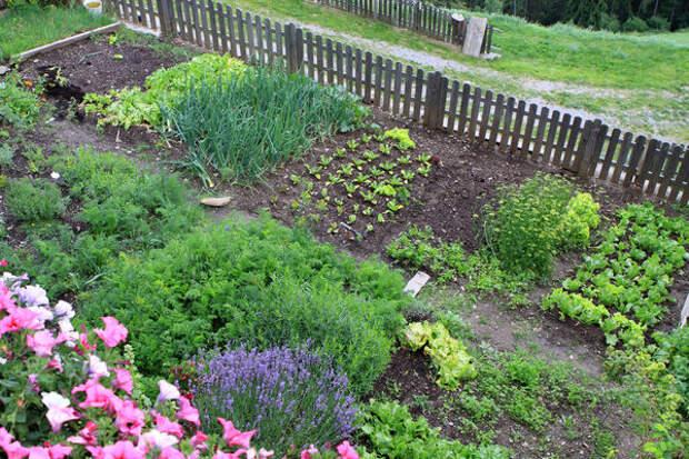 Нужно подумать, как организовать все так, чтобы и урожай вырастить достойный, и сил на это затратить минимум