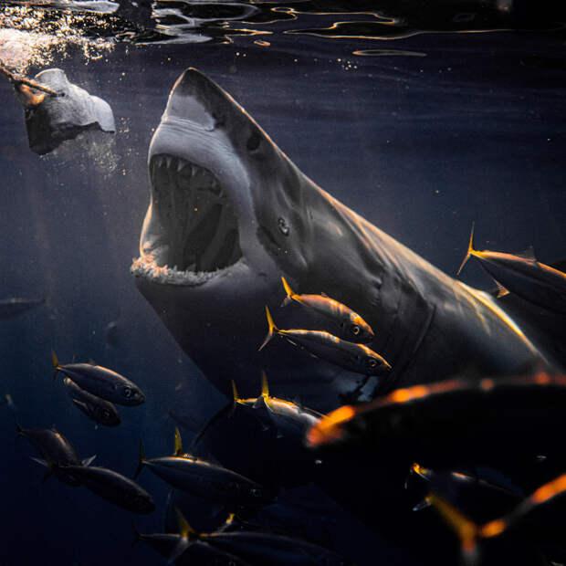 Акулы в объективе