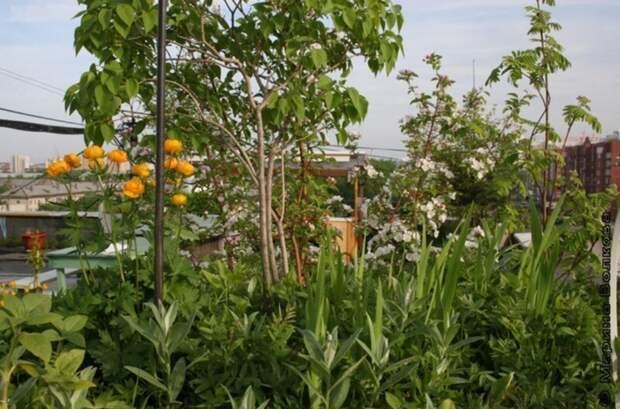 В Екатеринбурге уничтожили сад на крыше 9-этажки, который 18 лет назад разбил местный житель 9-этажка, екатеринбург, на крыше, сад, уничтожили