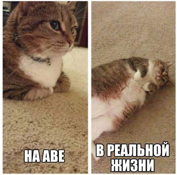 Смешные картинки и веселые фото для позитива (12 фото)
