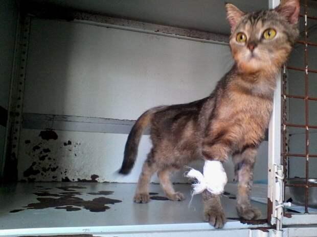 Тощая кошка едва передвигала лапы, ковыляя по двору, но никто не замечал ее волонтер, истории спасения, история спасения, кошка, полосатая кошка, приют
