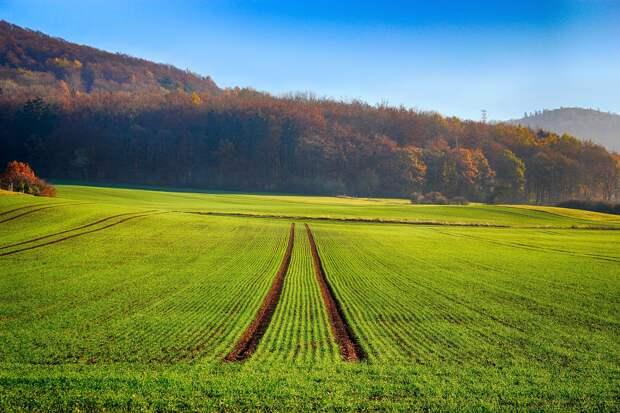 До 15 миллионов саженцев елей и сосны планируется выращивать в Удмуртии