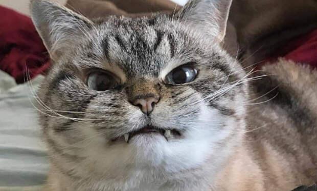 10 пород кошек с самым непредсказуемым характером