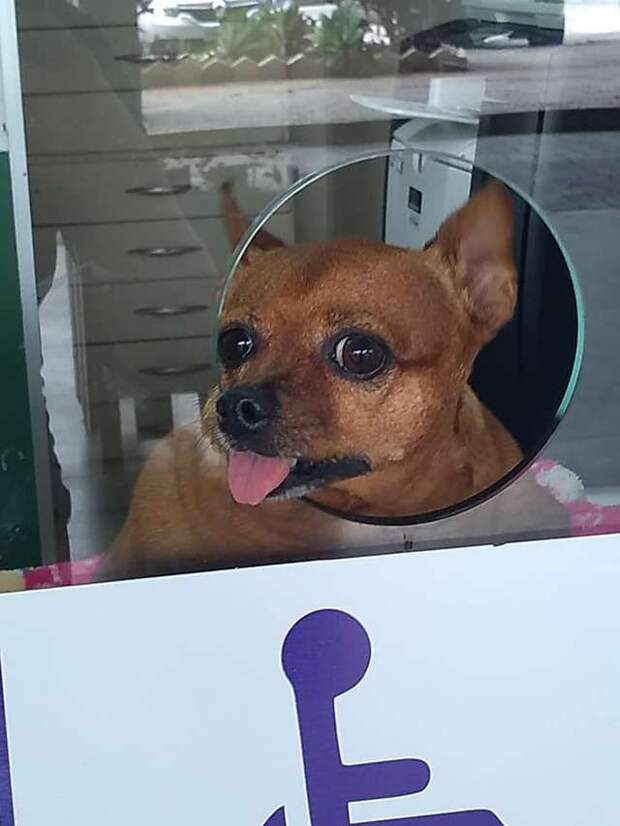 Покупая билет, каждый пассажир видит в окне кассы милую собаку, которая сидит там не просто так
