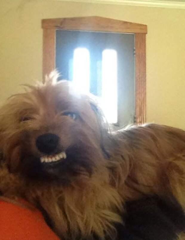 25 собак, которые делают очень странные вещи...