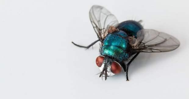 Немецкий производитель инсектицидов стал защитником насекомых
