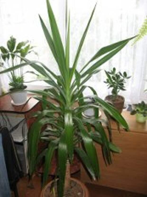 7 лучших растений для очистки воздуха внутри помещения