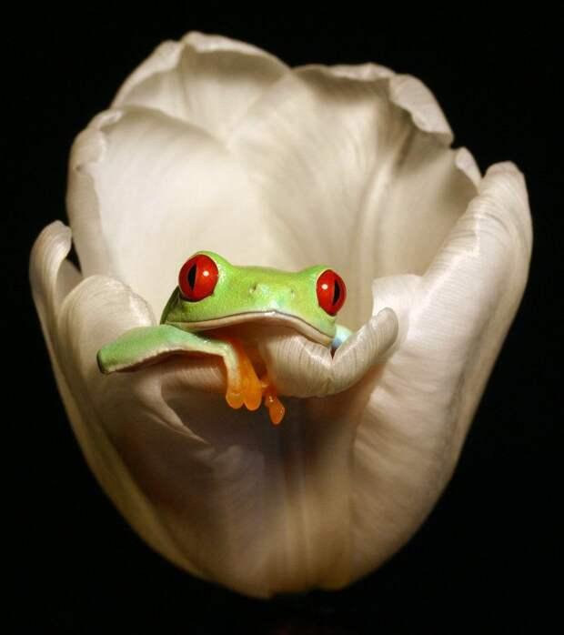 Frogs13 Оригинальные лягушки