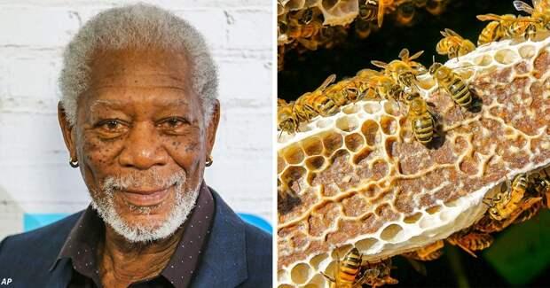 Морган Фримен превратил своё 50-гектарное ранчо в огромное убежище для пчёл