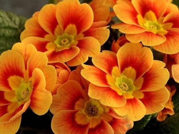 Пять полезных советов для пышного цветения комнатных цветов