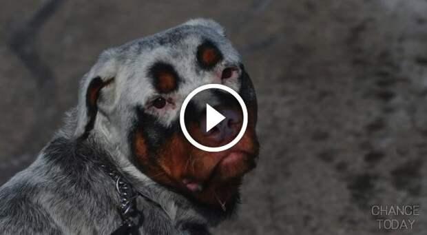 8 удивительных собак с необычным окрасом