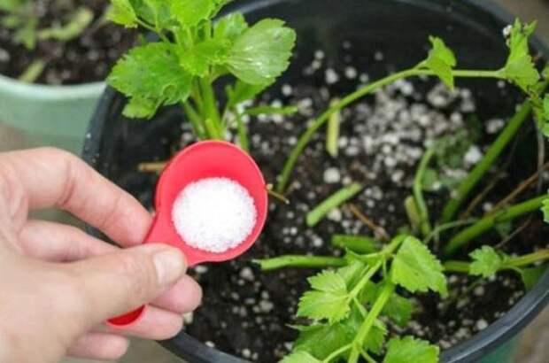Поможет улучшить почву и получить обильный урожай. /Фото: photo-1-baomoi.zadn.vn