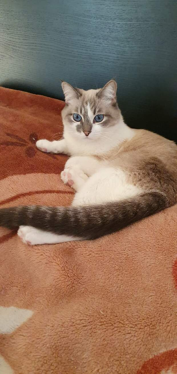 Котёнку, живущему в подъезде, кто-то сломал лапу. Об этом узнала девушка и пришла ему на помощь