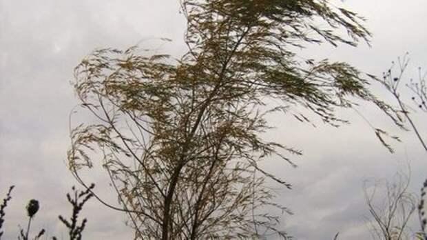 В Красноярском крае сохранится ветер