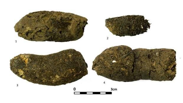 Окаменевший кал раскрыл рацион древних собак Смоленской области