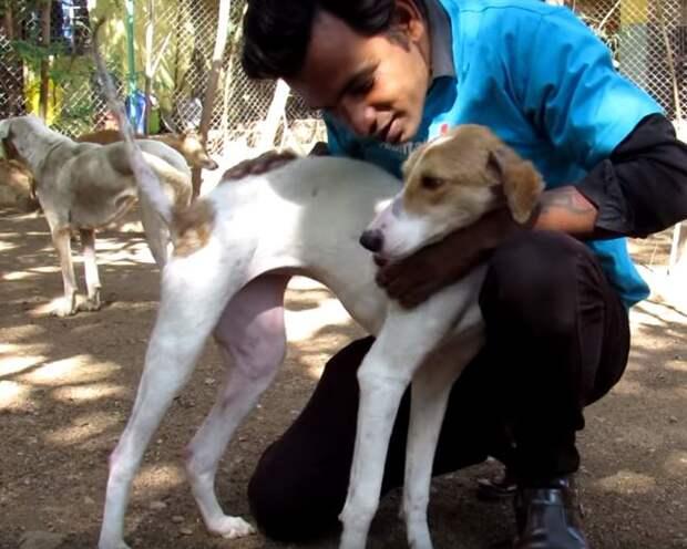 Добрая история о розовой собаке… Волшебное превращение из Боли в Счастье – это лучше, чем сказка о Золушке!