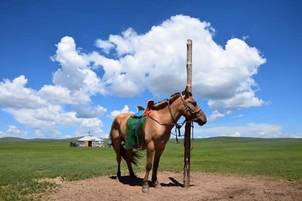 Монгол без лошади, как птица без крыльев
