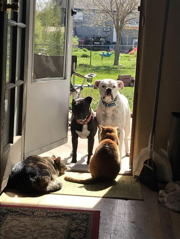 Эти двое хотят войти, но не могут пройти мимо  кошек!))