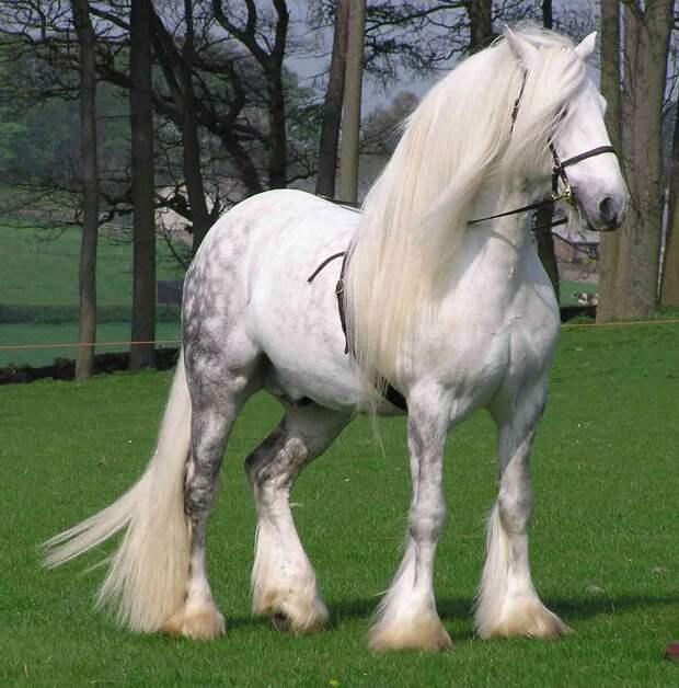 3. Першеронская лошадь.