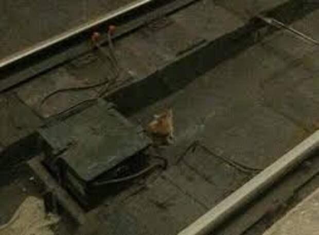 Мужчина прыгнул на рельсы в метро, чтобы спасти маленького котенка