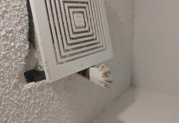 Герои этой подборки — кошки, которые оказались в глупых ситуациях