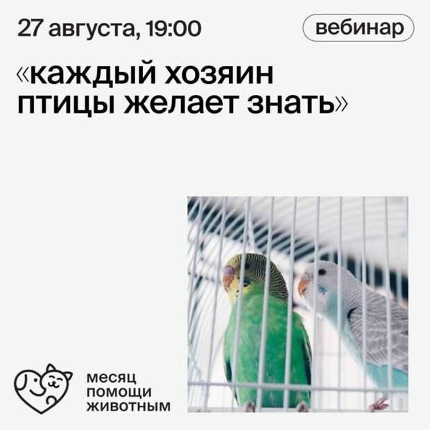Каждый хозяин птицы желает знать …