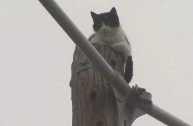5 историй о любопытных котиках, которых пришлось вызволять из беды