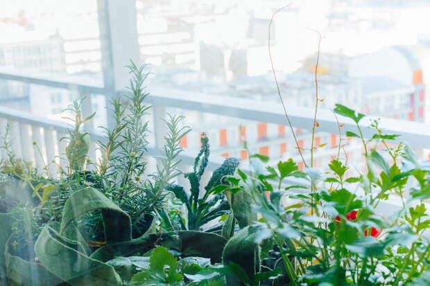 6 проектов: Что сажают на своих балконах французы