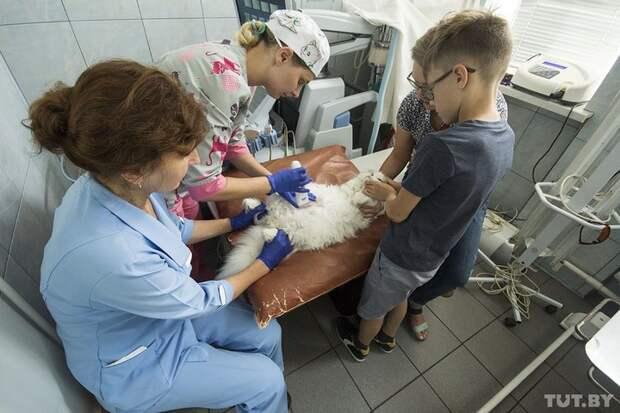 """""""Оперировал и плакал"""". Ветеринар вылечил и забрал себе слепого пса, которого принесли усыплять"""