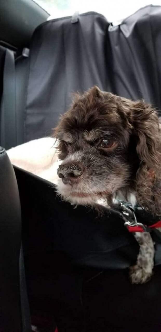 Постриженная собака