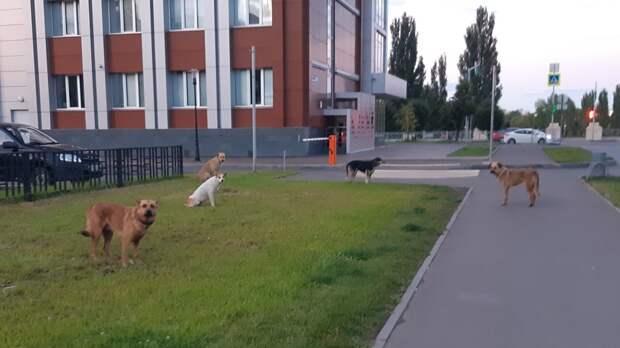 Исполком района вТатарстане завысил цифры опойманных собаках в8 раз