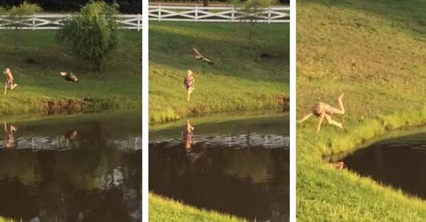 Девочка захотела прогнать гусей от озера – В этот момент случилось то, чего она не ожидала…