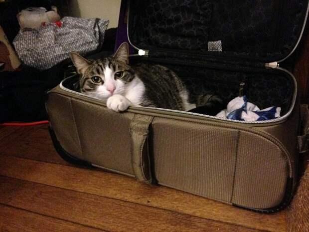 Меня с собой не забудь - я уже упаковался!