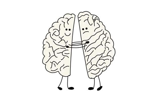 Как определить, какое полушарие мозга доминирует