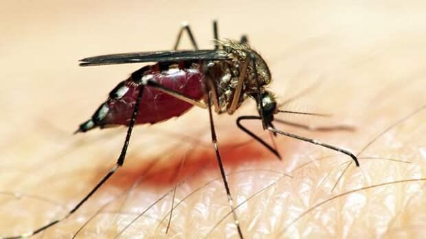 10 способов снять зуд от комариных укусов