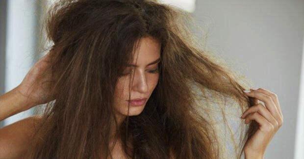 Сухие волосы: 5 эффективных и действенных рецепта по уходу