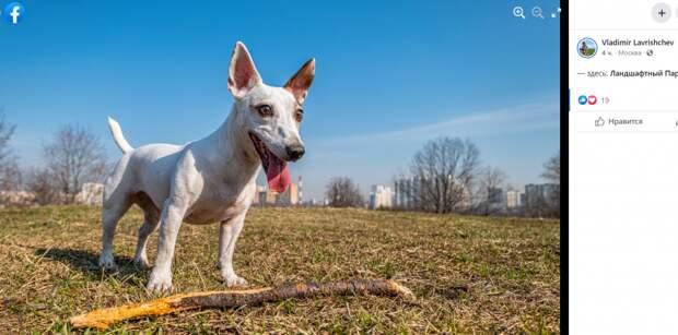 Фото дня: жизнерадостный пёс на прогулке