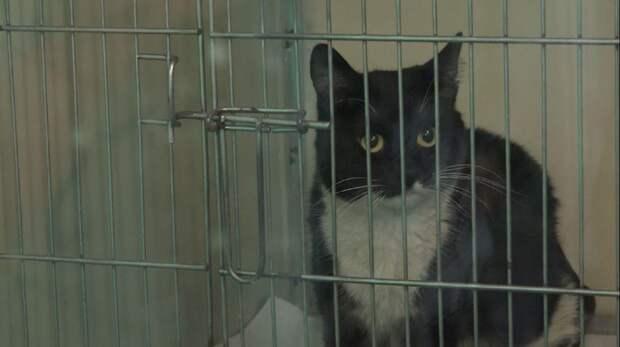 черно-белый кот за решеткой