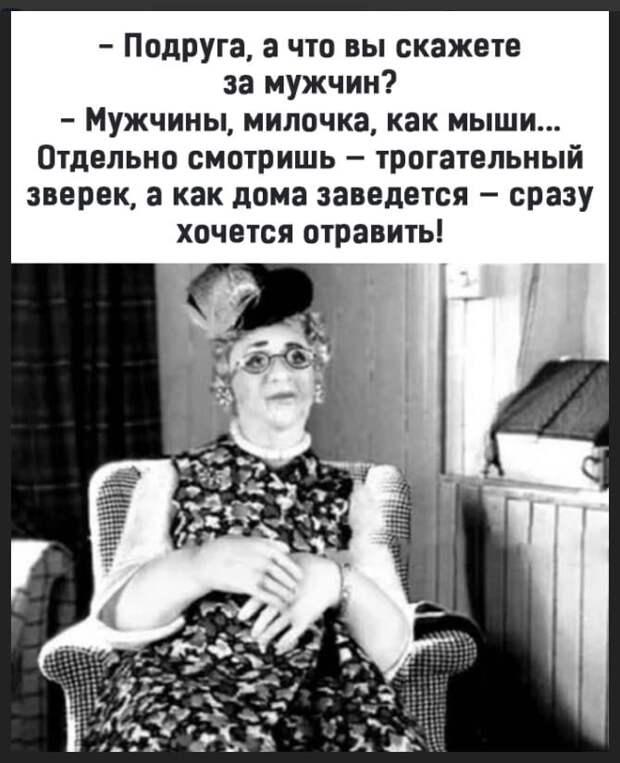 Возможно, это изображение (1 человек, сидит и текст «-подруга, a что вы« скажете за мужчин? -мужчины, милочка, как мыши... отдельно смотришь трогательный зверек, a как дома заведется сразу хочется отравить!»)