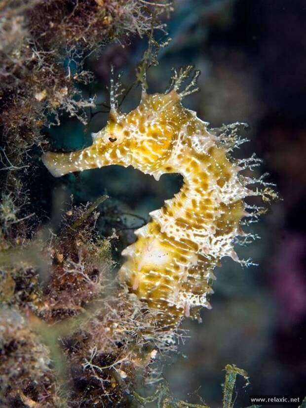 underwater_006
