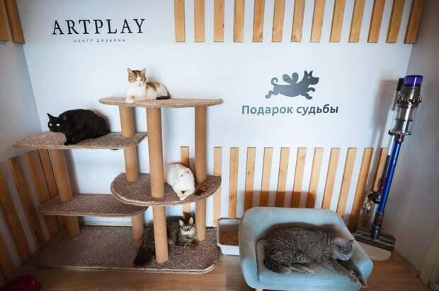 В Artplay появилось первое в Москве pop-up пространство для кошек, ищущих дом