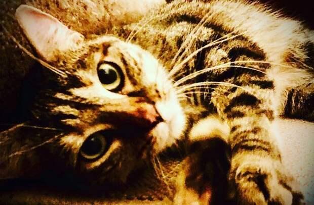Актер Рики Джервейс думал взять кошку напередержку, нотаизменила его планы