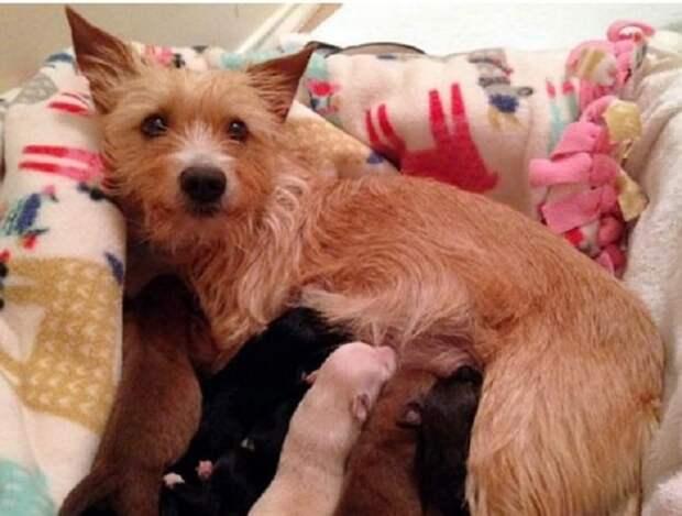 Дети не бывают чужими: собачка выкормила новорожденных щенков после гибели собственных