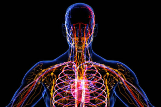 Лимфатическая система: о чем не знают 90% врачей