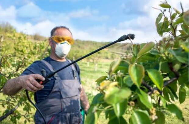 Сад весной: три обязательные весенние обработки против болезней и вредителей