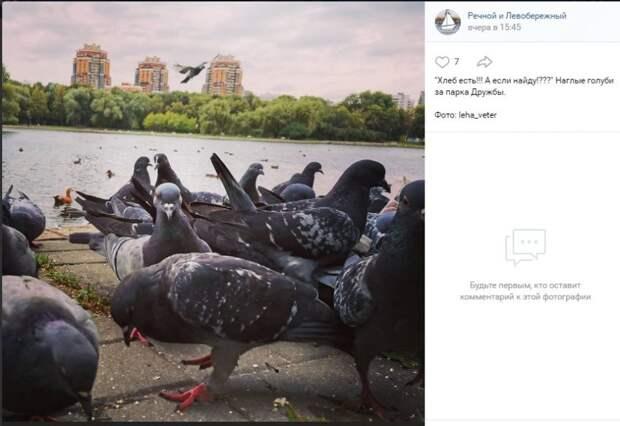 Фото дня: перед клювом у  голубей парка Дружбы