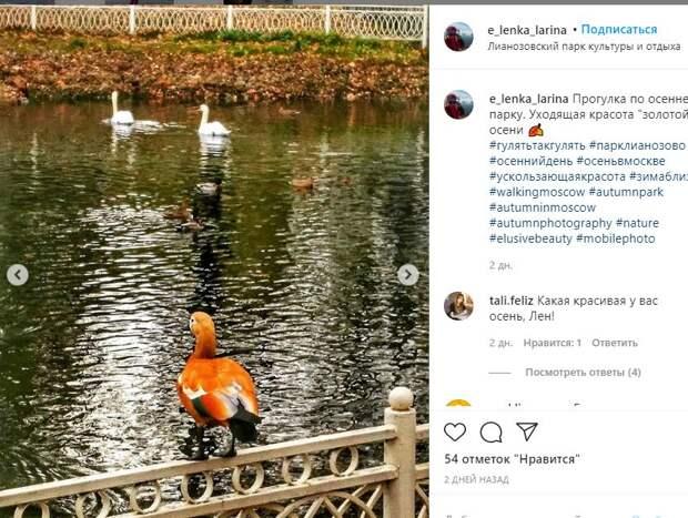 Посетитель Лианозовского парка уместила в одном фотокадре три вида водоплавающих