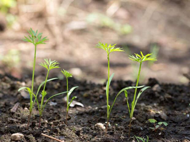 В теплой почве семена взойдут быстро