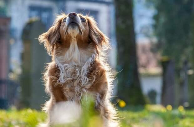 Собачка постоянно каталась на автобусе надеясь найти хозяина