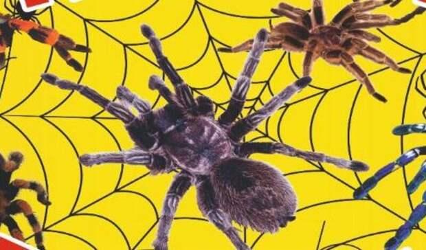 Впервые вУфе работает уникальная выставка «Удивительный мир пауков»